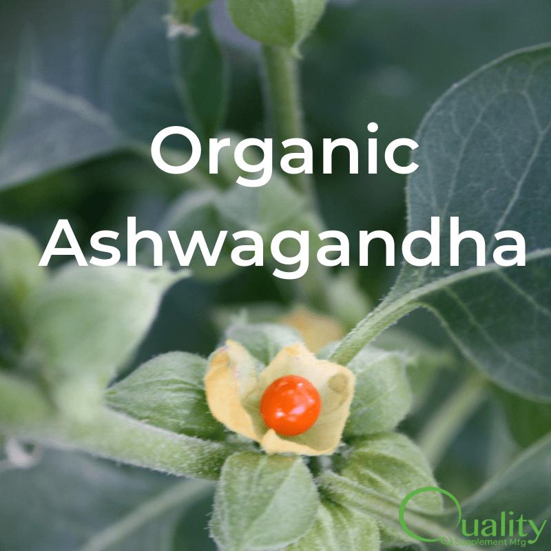 organic ashwagandha plant